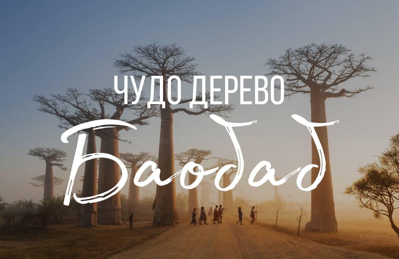 Чудо-дерево Баобаб