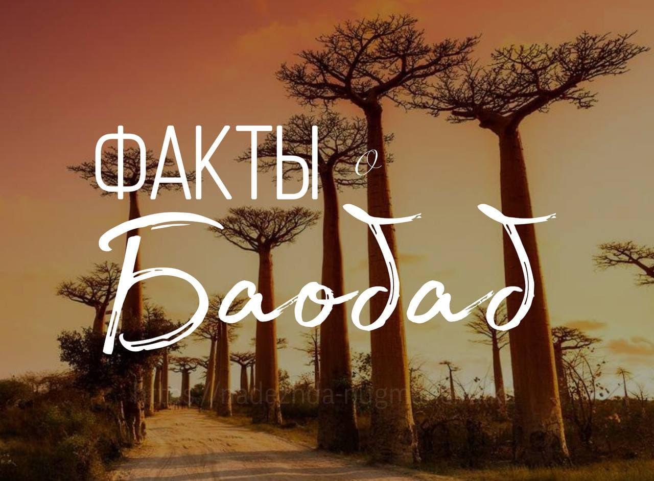 Интересные факты о дереве Баобаб